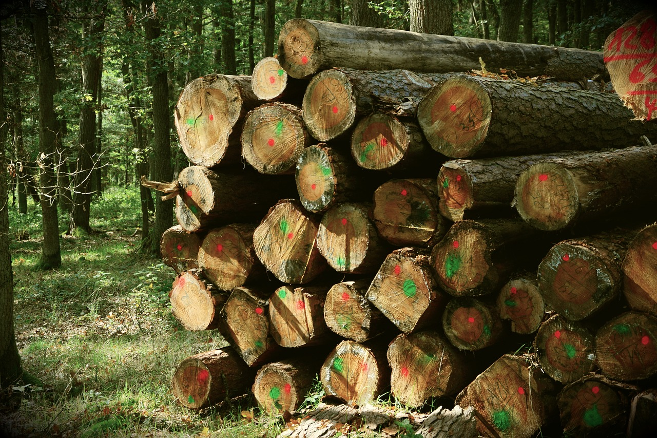Sustainability and our hardwood forests - Image